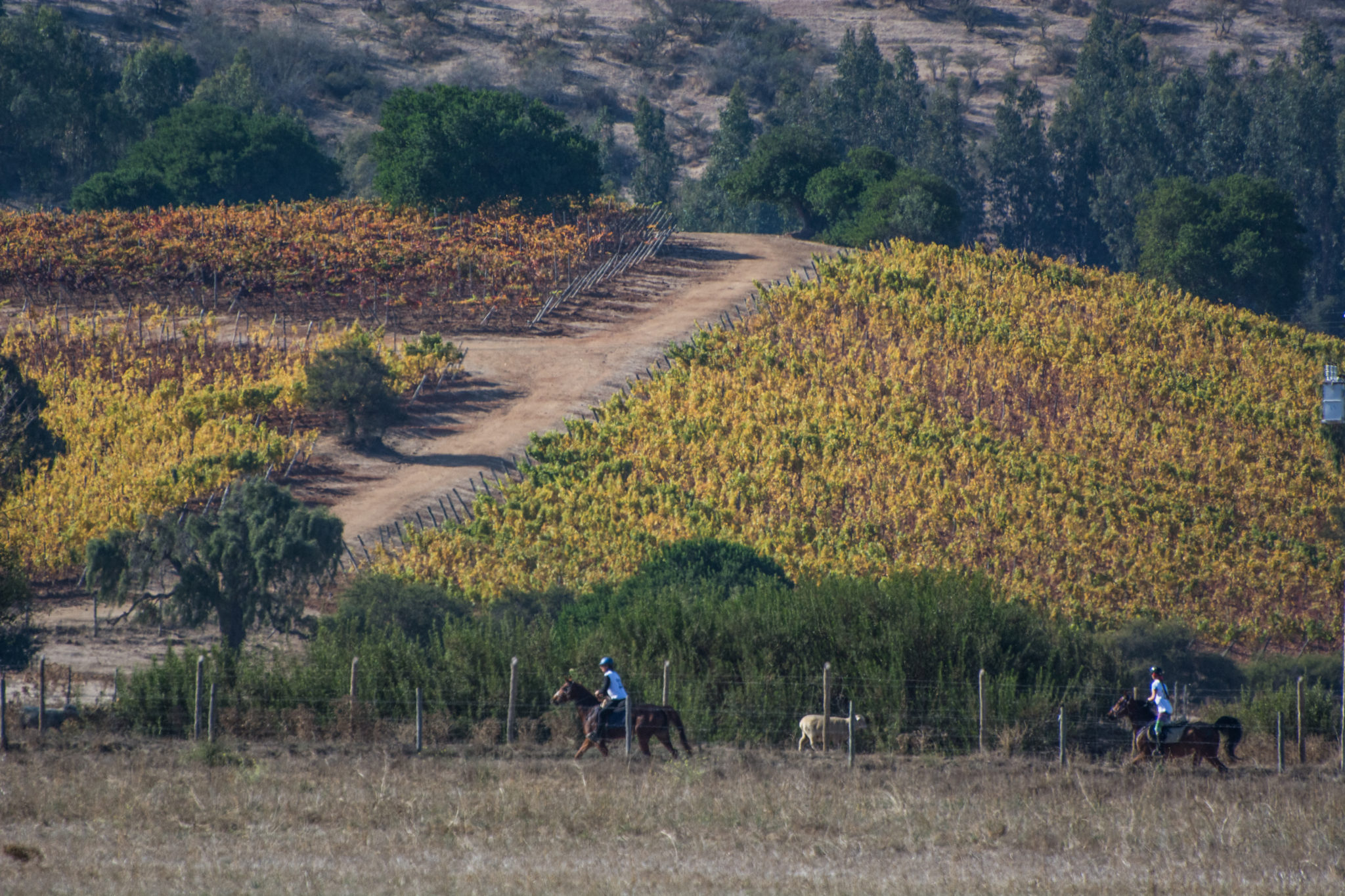 Lagunillas – Matetic, Chile. Riders going through the fields