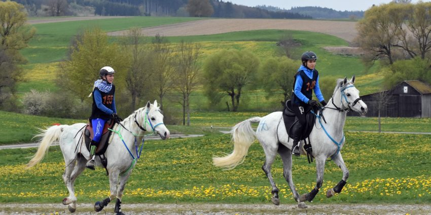 Endurance World Bavaria Spring. A duo of riders going through the fields.