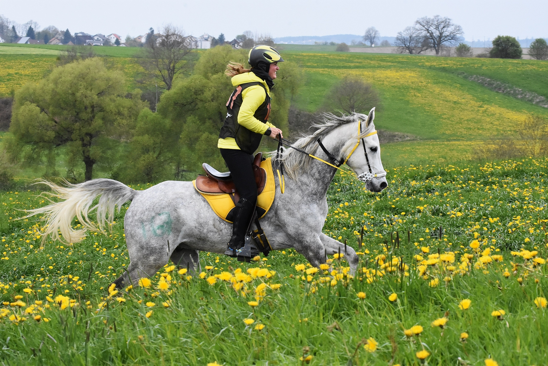 Endurance World Bavaria Spring. Yellow flowers.