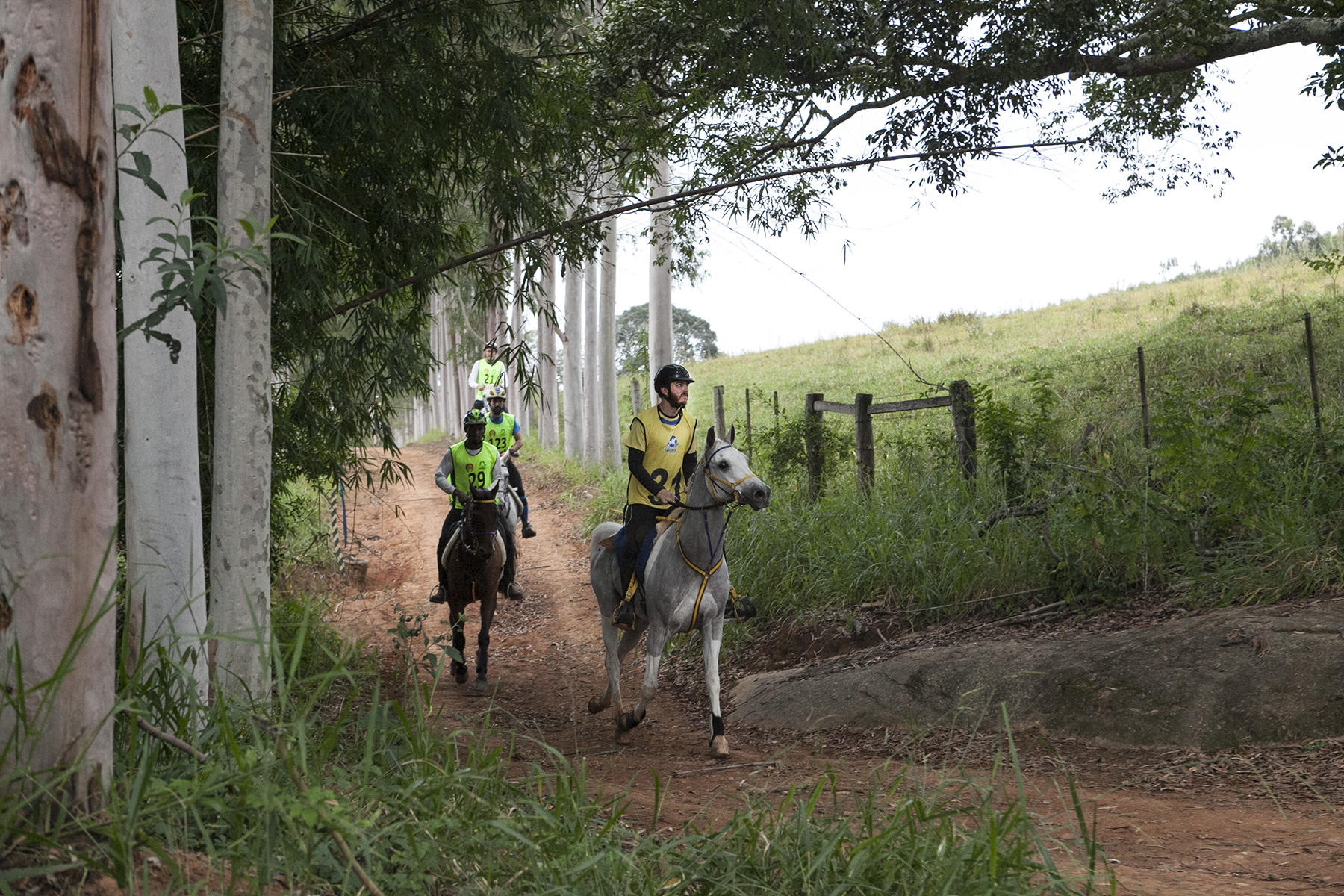 Endurance World Bragança Paulista. Competitors riding in the forest.