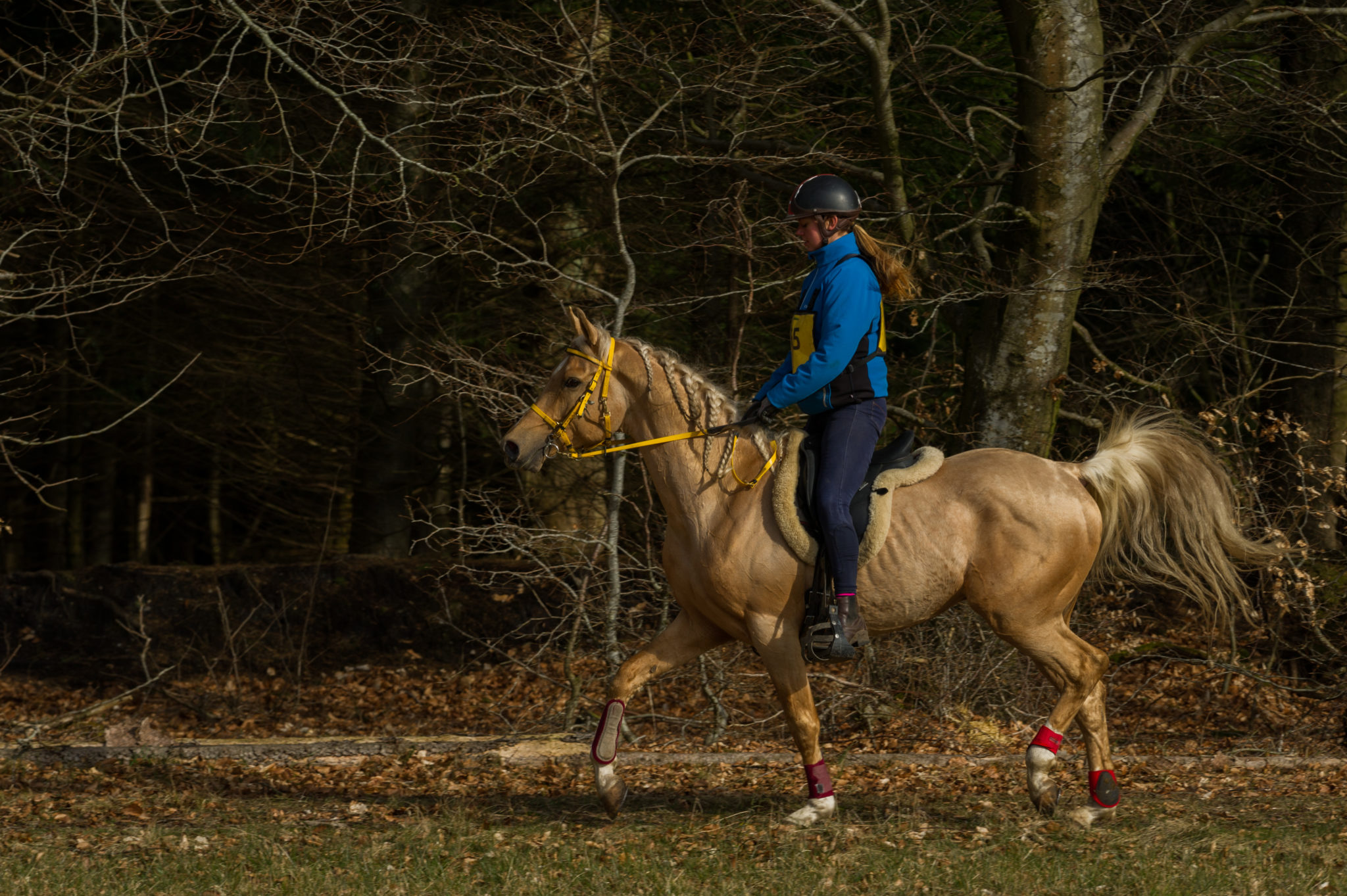 Endurance World FEI Endurance Forum 2017. Rdiing in the forest.