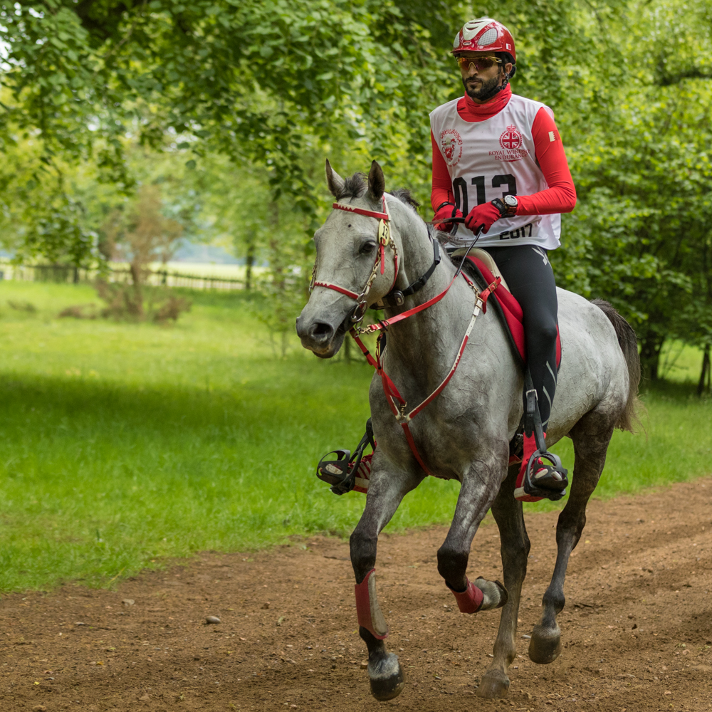 Endurance World Royal Windsor. Sheikh Nasser in action.