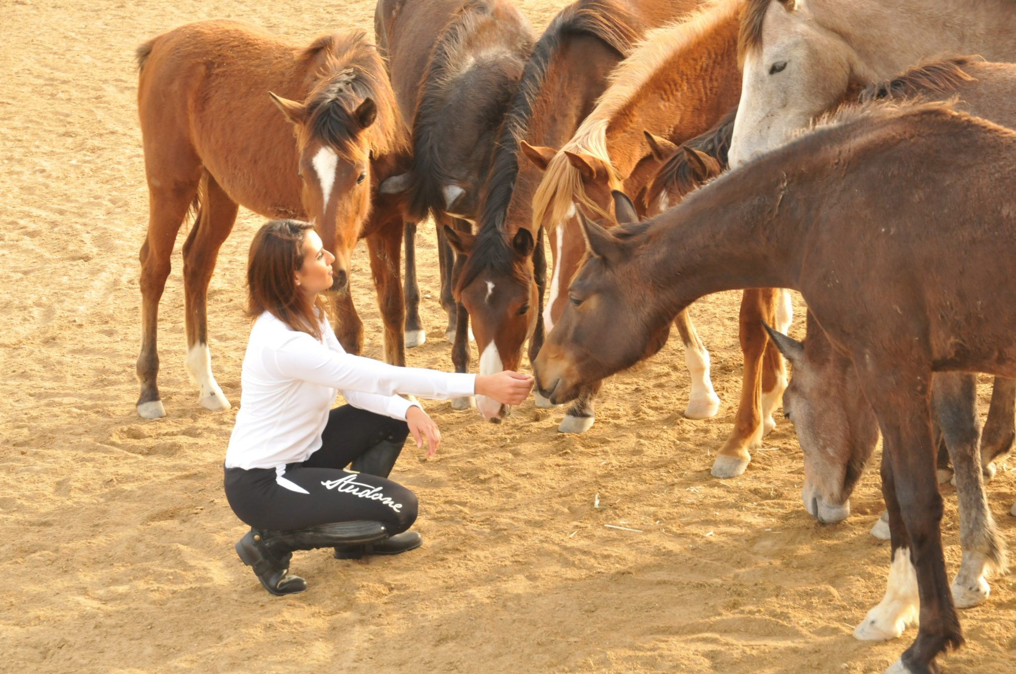Endurance World Manal Fakhrawi. Surrounded with horses.