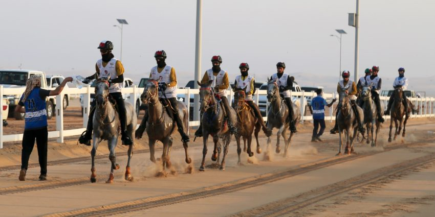 Endurance World Al Wathba Cup. The chasing group.