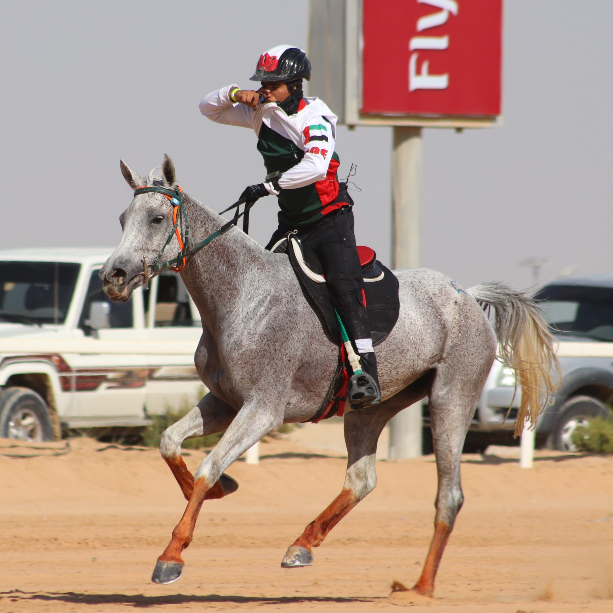 Endurance World Al Maktoum Festival. Winner of Mares.