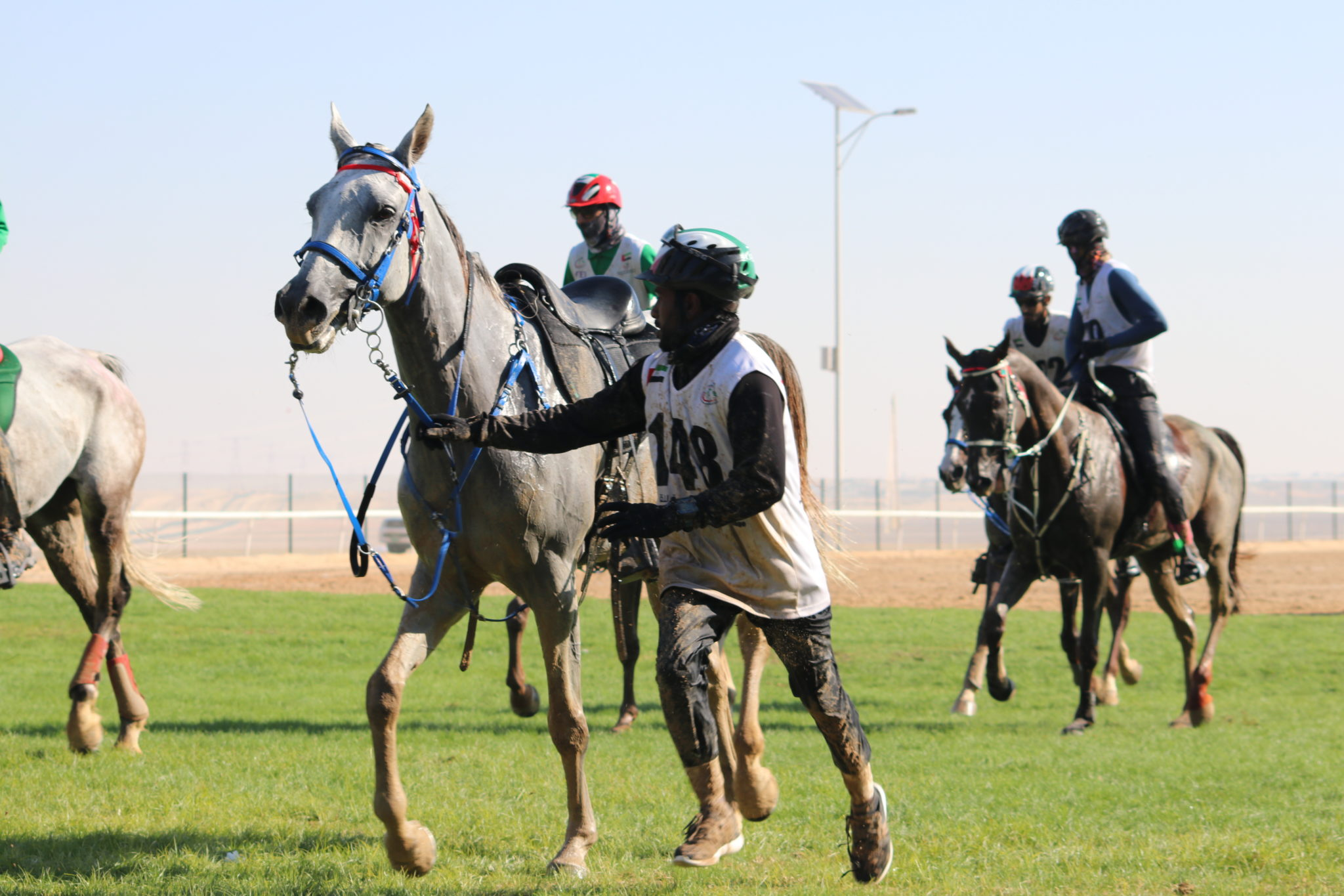 Endurance World Al Reef Cup. Looking after the horse.