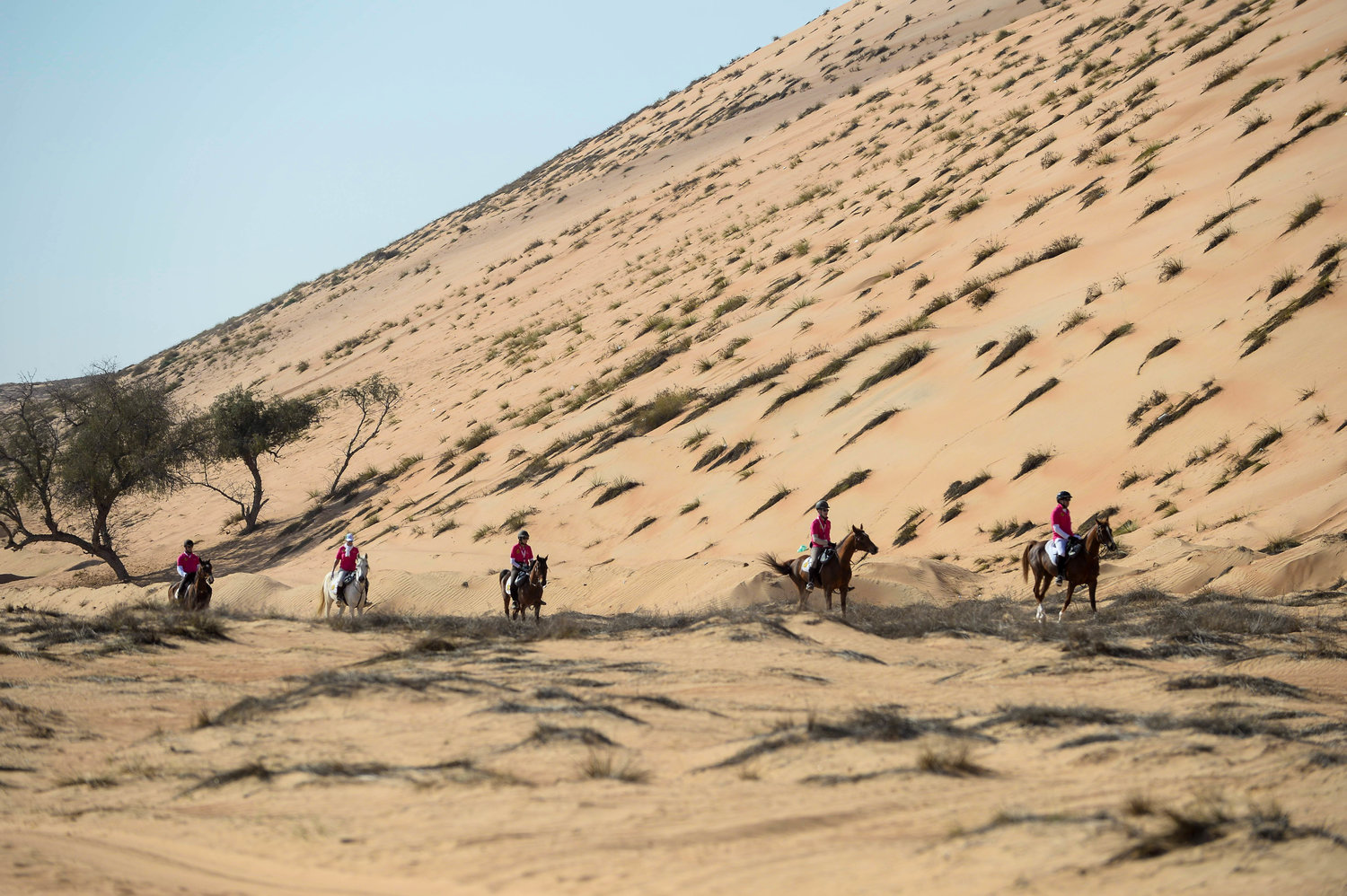 Endurance World Gallops of Morocco. Big dunes.